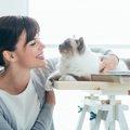 猫を飼うメリットとデメリット