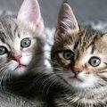子猫の目やにの原因と考えられる病気、その対処法