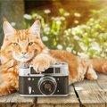 猫にフラッシュ撮影してはいけない理由!失明の危険性と安全な撮影方法
