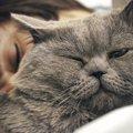 猫と暮らして初めて分かる10の大変なこと