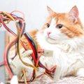 猫にコンセントは要注意!危険な理由と4つの対策