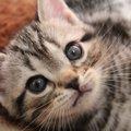 サンリオの猫のキャラクター4選!おすすめグッズまで