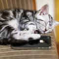 猫の鳴き声アプリ4選のご紹介