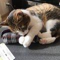 猫のイタズラをやめさせるための4つの対応