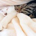 猫に布団を奪われた時の対処法