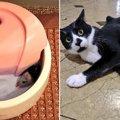 【爆笑】猫さんのイタズラを見た瞬間に思わず出ちゃう言葉『ゲッ!』
