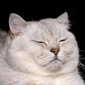 猫がゆっくりまばたきする2つの意味