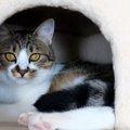 猫をペットホテルに預ける時のポイント