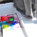 猫が嫌いな色とは?見える色と見えない色
