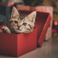 『猫の舌』チョコとは?特徴やおすすめな理由