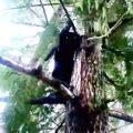 助けなんか待ってられニャい…木を下り始めた猫を救出!