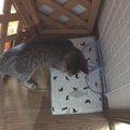 猫2匹で暴れても大丈夫!水がこぼれない水飲み場を手作り♪