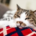 猫が『素っ気ないとき』に考えられる原因4つ!機嫌を直してもらう方法…