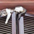 あるある!猫のおっちょこちょいな行動9選