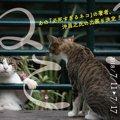 7月11日開催!横浜赤レンガ倉庫ねこ写真展2018とは?
