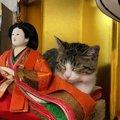 『こちらひな壇…お猫さまに占拠されています...』ひにゃ壇で寛いでる…