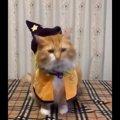 【話題】皆わくわくハロウィン!仮装して楽しみに待つ猫さんを一同称…