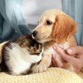 新型コロナウイルスは犬や猫に感染する?ペットから人への感染は?