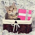 【絶対ダメ!】猫にNGなバレンタインのプレゼント3つ