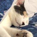 寝顔が天使すぎる♡猫のぽてとさんと一緒にお昼寝♡