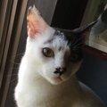 譲渡会常連だった保護猫「そら」との出会い
