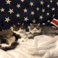 猫同士で『くっついて寝る』心理5つ