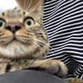 人には言えない…猫が大好きすぎる飼い主の恥ずかしい行動3つ
