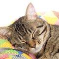 猫がすやすや寝ちゃう10の場所