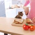 猫に食パンを与えても大丈夫?危険な種類のパンなど
