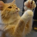 キャッツギャラリーで猫と触れ合おう!店内の様子や利用料金