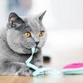 猫の脳トレに!餌が出てくるおもちゃおすすめ4点