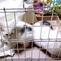 飼い主さんが火事で…残された20匹の猫たちの行方は?vol.3
