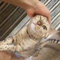 猫が飼い主に撫でられたとき『目をつぶる』心理5つ