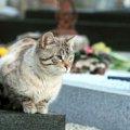 飼い主と猫が一緒に入れるお墓がある!