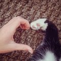 猫が『飼い主を信じている』ときにみせる行動5つ