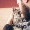 スペインでは初めて|猫がコロナウイルスの犠牲に