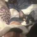 譲渡会では「猫からのテレパシー」を感じよう!声掛けされるのを待つ…