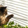 愛猫が迷子に!?捜索するためにまずやる事、ネットを使った探し方も