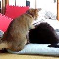 飼い主さんを起こそうとする猫