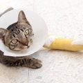 猫が傷を負うのはどんな時?もし傷があったら、どうしたら良い?