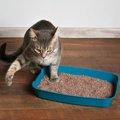 猫がトイレをしない時にも砂をかく理由