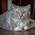 猫がビニールをなめる3つの理由と対策