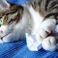 猫が紙を食べた!これって大丈夫?危険な3つの症状や対処法