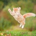 驚くべき猫の能力!可愛いだけじゃない、その実力をチェック☆