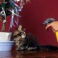 猫のしつけの正しい方法と気をつけるポイント