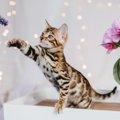 猫のスマホアイテムおすすめ5選!