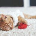 愛猫に人気のおもちゃは〇〇!遊ぶの大好きにゃんこ動画特集!