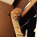 クローゼットの天袋が大好きな愛猫の為に『猫用のはしご』をDIYしてみ…