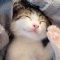 猫がふみふみする理由