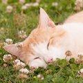 猫の予防接種で防げる病気!愛猫のために必ず接種を